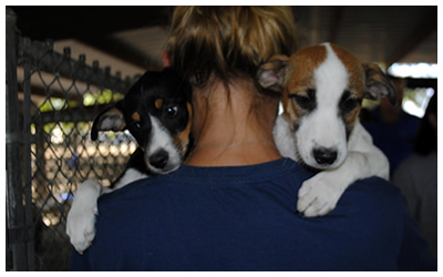 Austin Pets Alive volunteer transfers puppies from Lockhart shelter